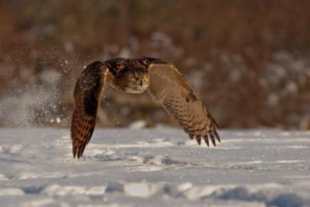 Wildlife Photography Worskhop